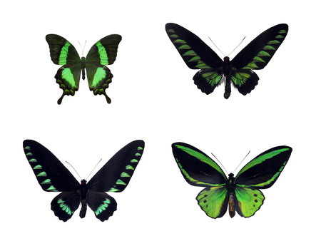 Set of four green tropical butterflies Фото со стока