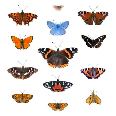 Set of 13 european butterflies Фото со стока - 94588225