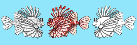 Loinfish colorful and contour on blue Фото со стока - 103676224