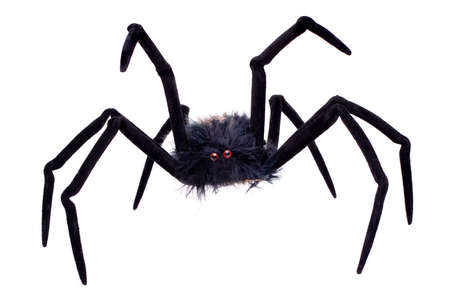 samhain: Halloween spider isolated on a white background.
