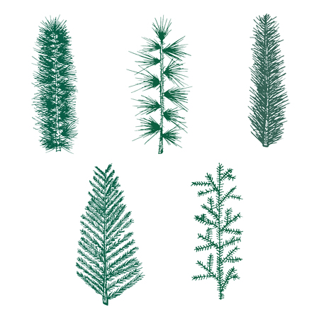 fir branch: set fir branch pine isolated on white background. christmas tree Illustration