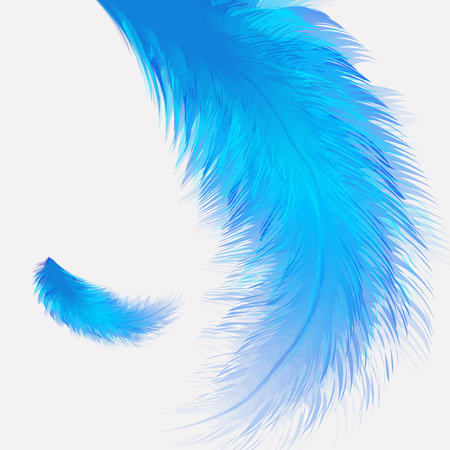 Beautiful colorful small and big realistic bird feathers isolated on white background. Vector illustration.