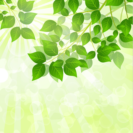 Forest background with sunlight coming through the green leaves. Green background with fresh spring foliage, sparkles and sunbeams. Young leaves in the rays of spring dawn. Close-up. - Vector graphics Vector Illustration
