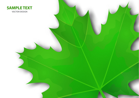 Realistic green maple leaf on white background. Vector eps10 illustration - Vector graphics. Illustration