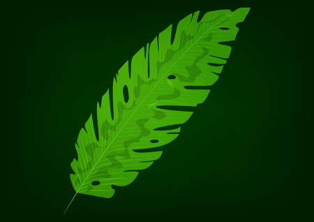 Isolated green banana leaf on black background. Vector illustration