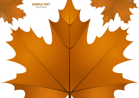 Set of isolated brown maple leaves on a white background. Vector illustration