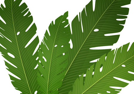 Composition of exotic palm banana leaves on a white background. Vector summer illustration for your design. Stock Illustratie