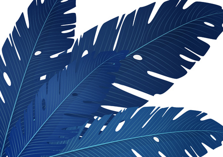 Composition of exotic palm banana leaves on a white background. Vector summer illustration for your design. Illustration