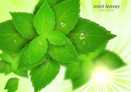 Fresh mint in the bright rays of the sun. Menthol is a healthy scent. Herbal natural plant. Green mint leaves. Vector illustration for your design.