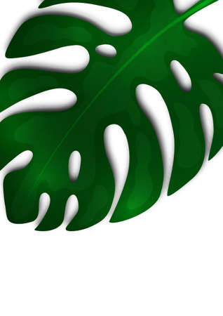 Large green leaf of monstera on a white background. Creative template for your design. Vector illustration