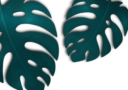 Large blue monstera leaves on a white background. Creative template for your design. Vector illustration Illustration