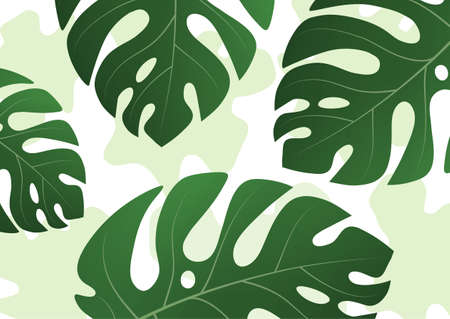 Large green leaves of a tropical monstera plant on a color light background. Vector illustration for your design.