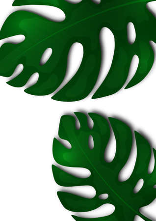 Large green leaves of monstera on a white background. Template for your design. Vector illustration Illustration