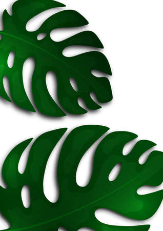 Large green leaves of monstera on a white background. Template for your design. Vector illustration 向量圖像