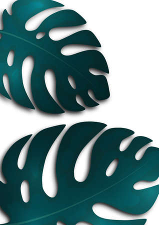Large blue monstera leaves on a white background. Creative template for your design. Vector illustration 向量圖像