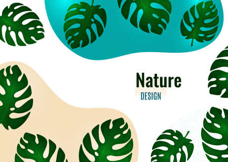 Abstract shapes with wavy edges, monstera leaves on a white background. Stylish modern eco template for your design. Vector illustration.