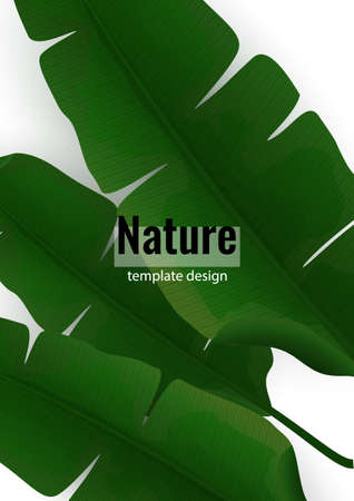 Composition of exotic palm banana leaves on a white background. Botanical vector illustration for advertising. Vettoriali