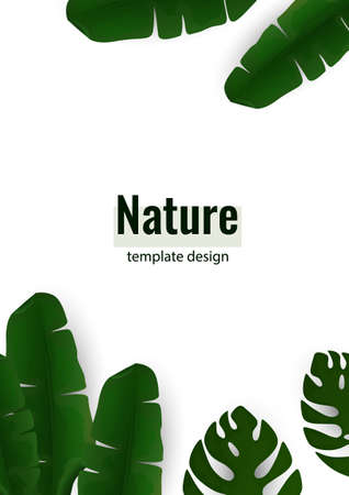 Composition of exotic palm banana leaves and monstera leaves on a white background. Botanical vector illustration for advertising.