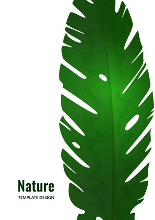 Isolated exotic tropical leaf on a white background. Template for your design. Vector illustration