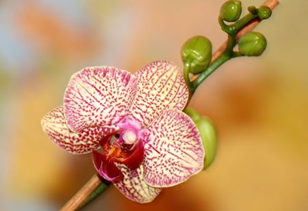 Orchidee Stock Photo
