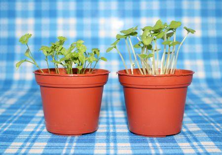 Gartenkraüter