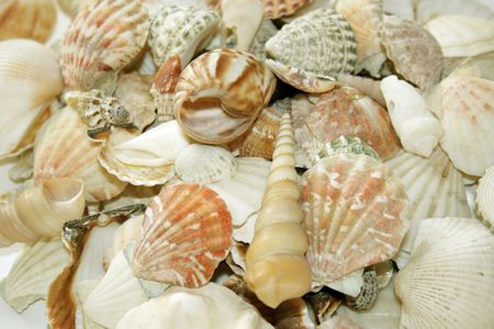 Sea Shell photo