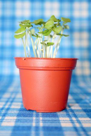 Pflanzen: K�chenkra�ter Stock Photo