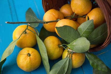 tangerines or mandarins