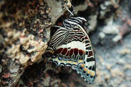 beautiful swallowtail butterfly on rock
