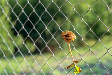 yellow flower hanging on the wire fence