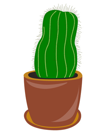 potted cactus on white background