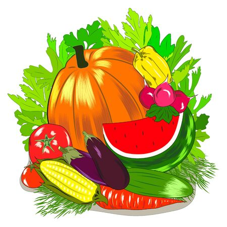 The harvest of vegetables farmers market. Colorful hand drawn vector .