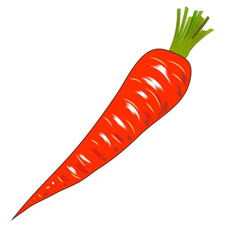 Carrot in flat design on white background. Vector illustration.
