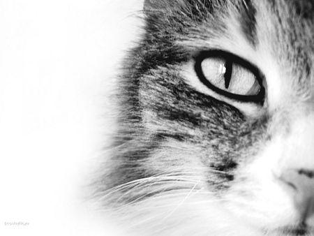 """kotów: cat """"s oczu"""