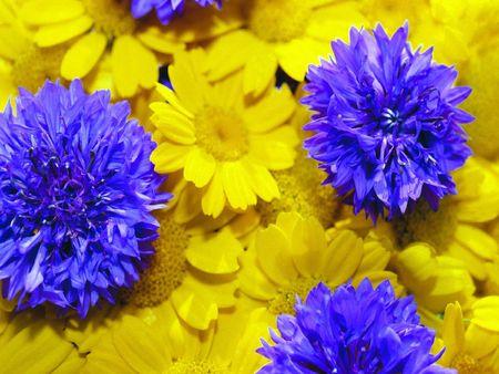 enviro: Wild flowers