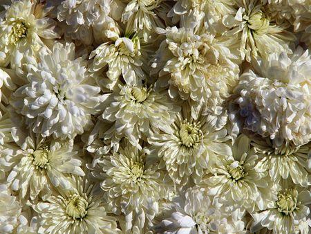 enviro: Wild flowers Stock Photo