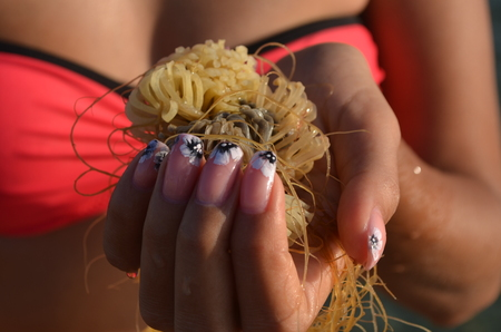 A girl on a beach in Crimea holds in the hand of water-plant