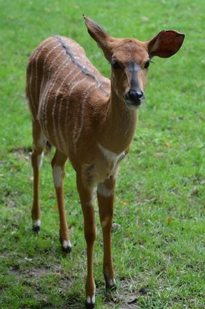 Roe deer in the zoo Frankfurt am Main