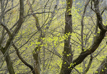 many branches: Many branches with green leaves in spring