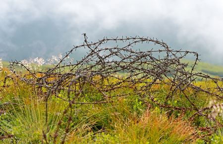 Hank old rusty barbed wire on a green background Stock Photo