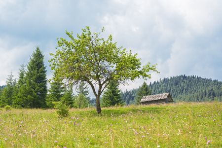 The tree and old house in the mountains Banco de Imagens