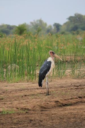 Safari to Tsavo East, Kenya  photo