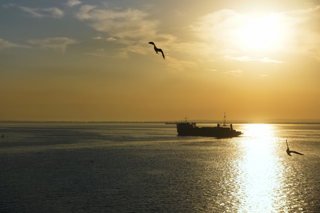 sunrise over the Strait,barge and seagull photo