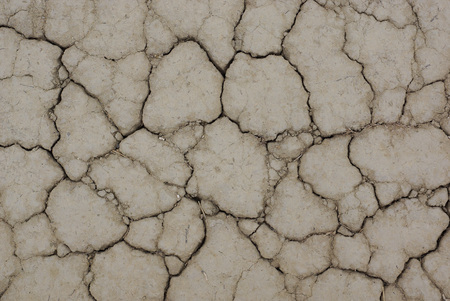 sprung: Drought. background of cracked soil.