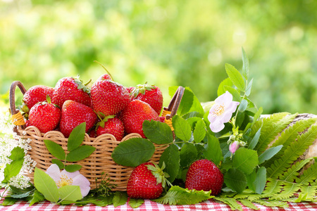 Strawberries in a wicker basket and flowers of a dogrose. Still life in a summer garden.