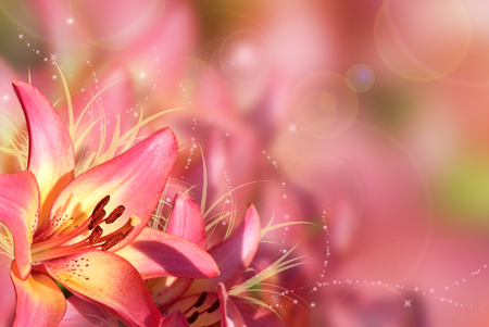 Background with pink flowers. Greeting card with lilies. Blurred background. Фото со стока