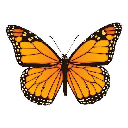Vector illustratie van de hand getrokken monarch vlinder geïsoleerd op een witte achtergrond