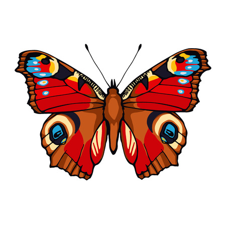 peacock butterfly: Vector illustration of hand drawn peacock butterfly isolated on white