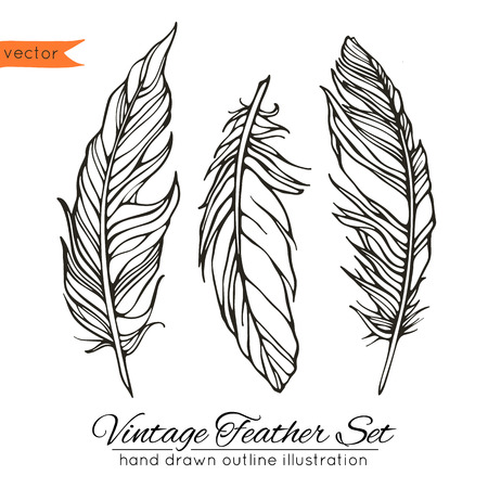 Vector illustration of hand drawn decorative feathers Vectores