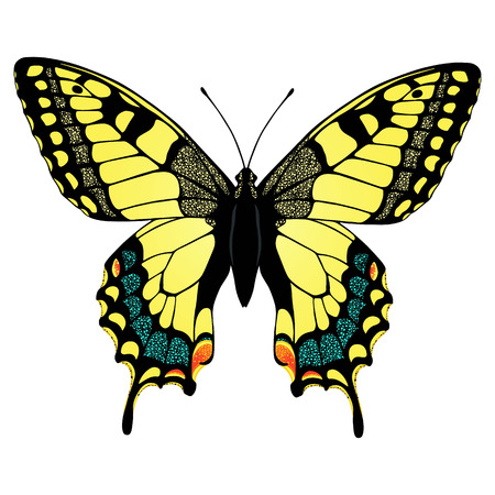 Machaon butterfly  Hand drawn vector illustration  Vector